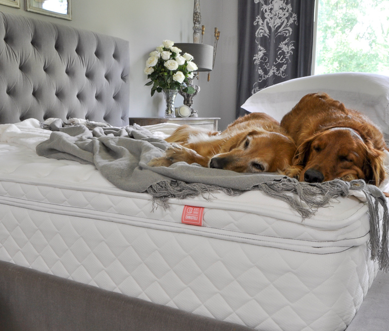 New Memory Foam Mattress with Golden Retrievers