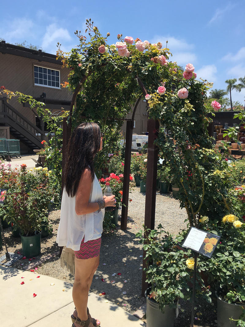 Beautiful rose covered archway at rogers gardens in newport beach california