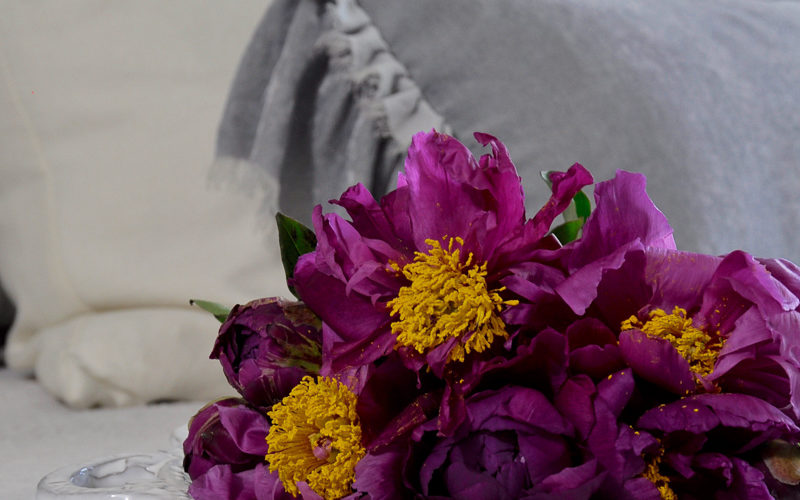 Purple peonies on gray and white bedding