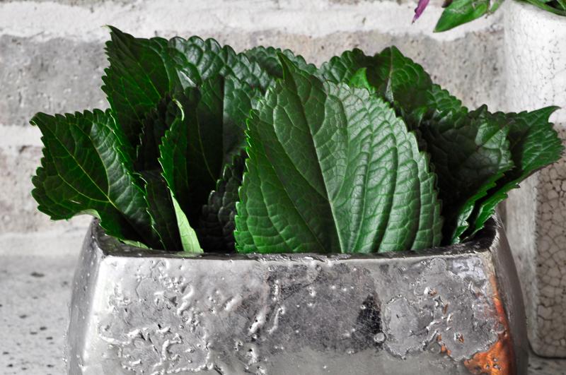 large-hydrangea-leaves-in-silver-metallic-pot_