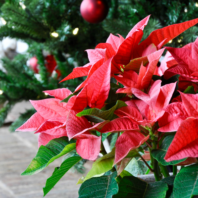 A Festive Christmas Porch