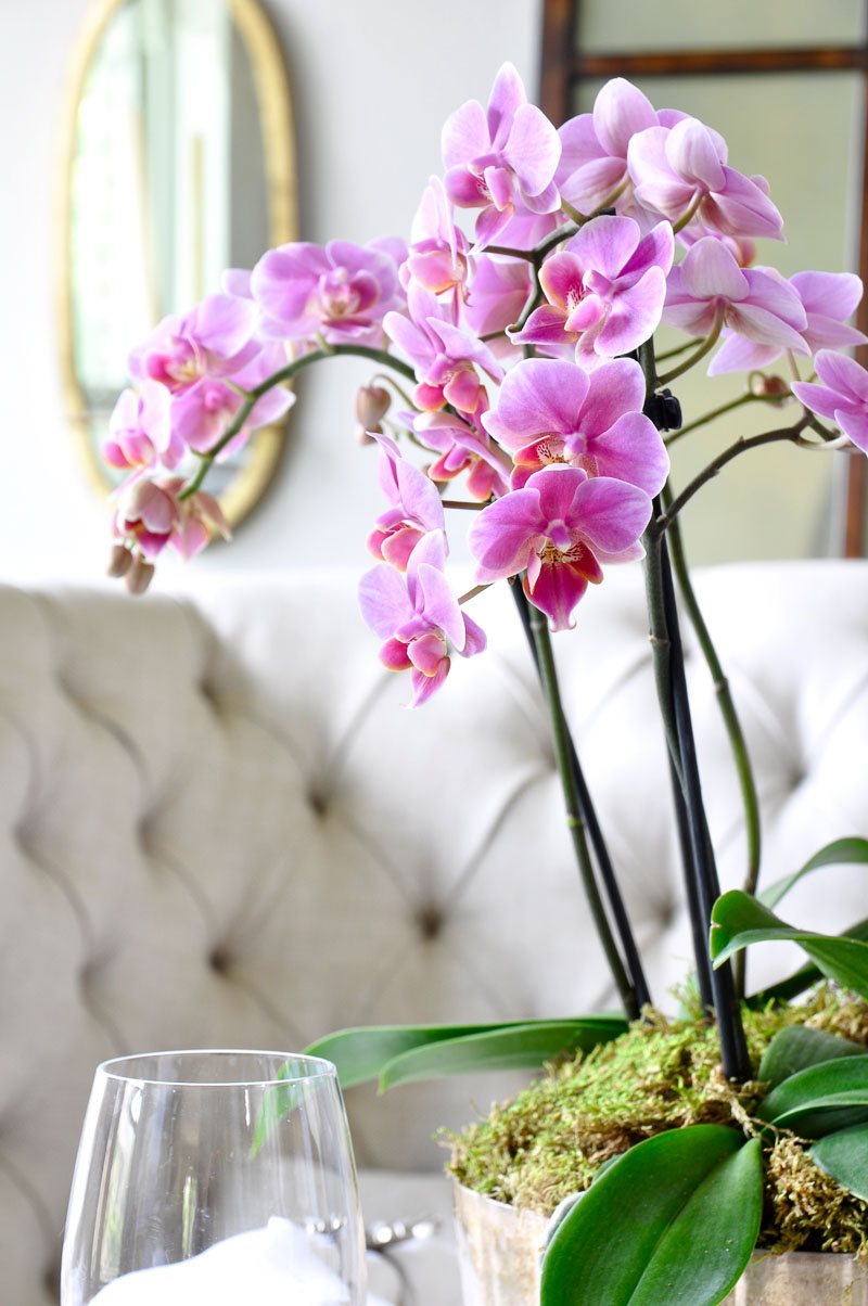 beautiful orchid arrangement on easter table