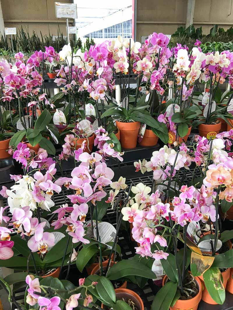 Garden Center Orchids