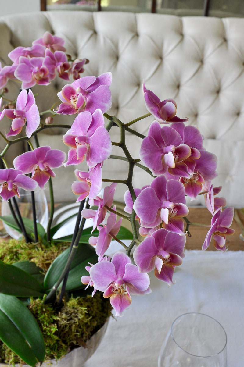 beautiful orchid arrangement how to