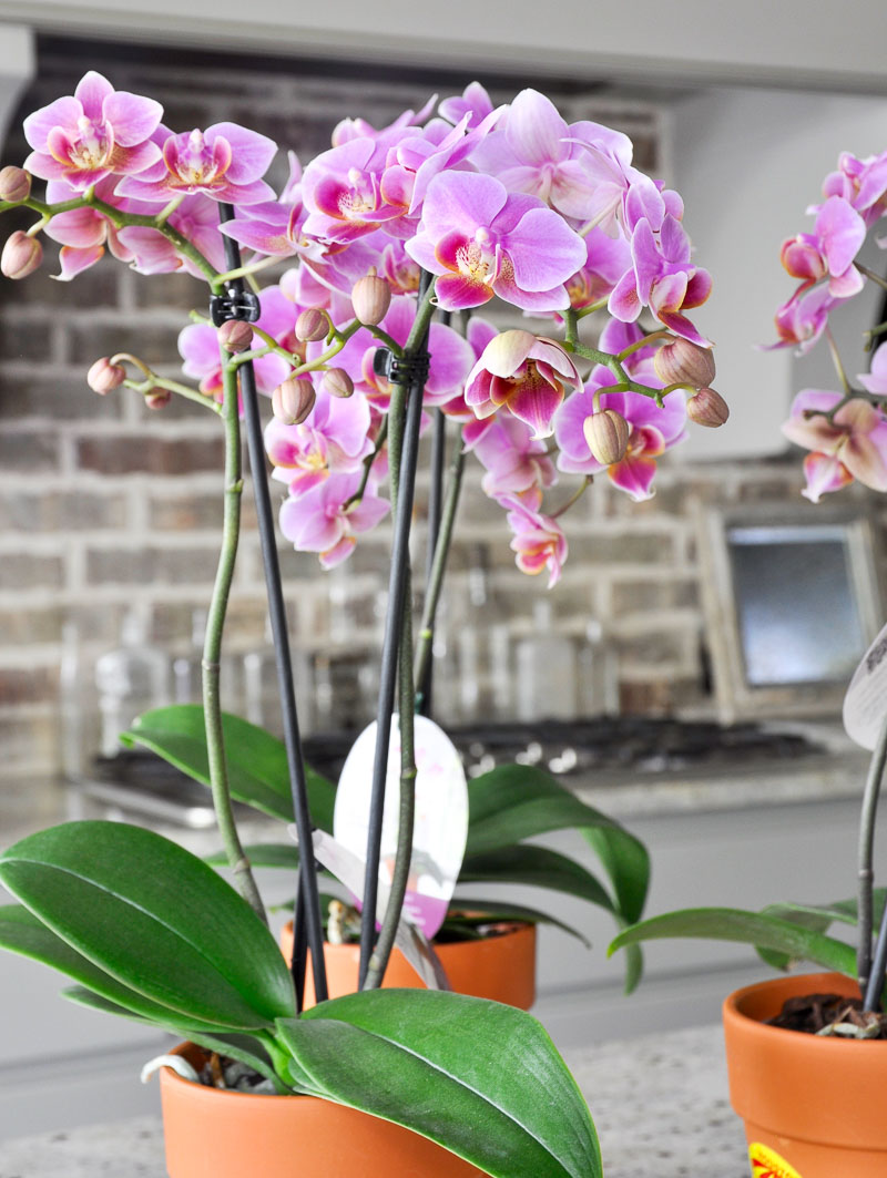 beautiful indoor orchids for arrangement