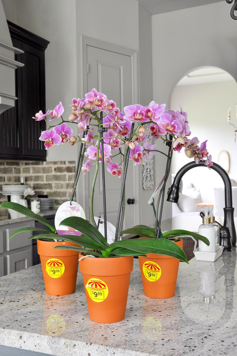 orchid plants for arrangement