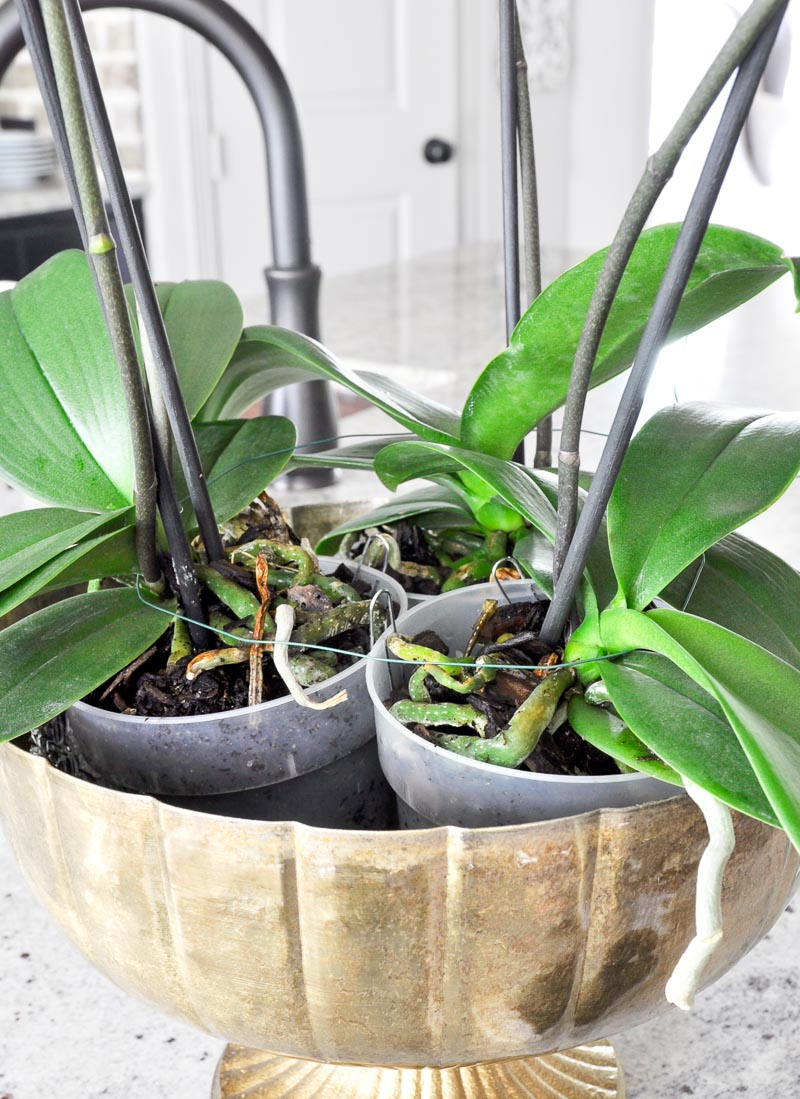 how to secure orchids in planter for arrangement