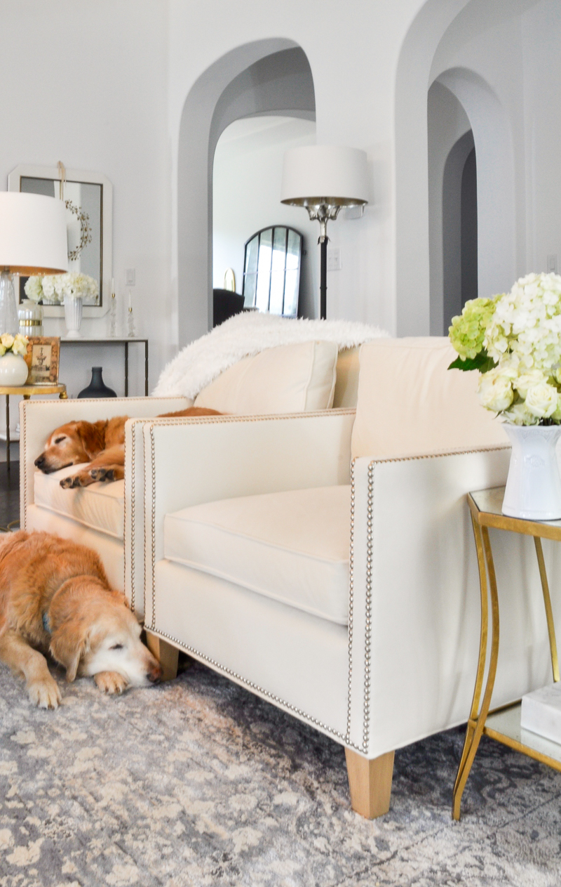 cozy living room with golden retrievers