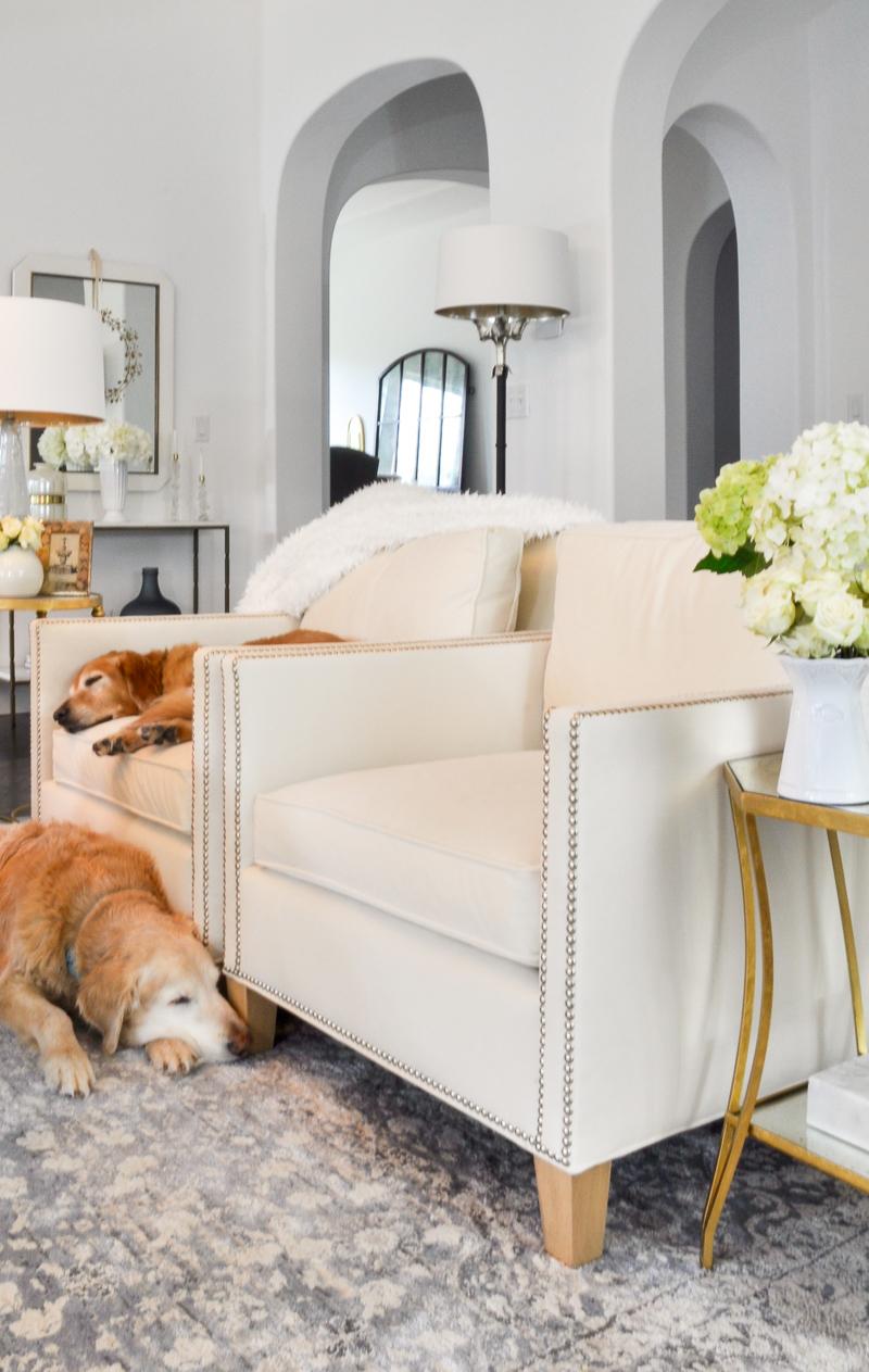 cozy living room with golden retrievers