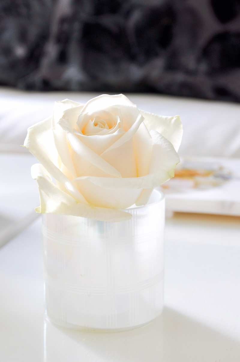 rose arranged in votive