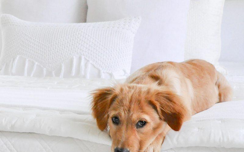 Meet Our New Puppy + My Top 10 Puppy Essentials