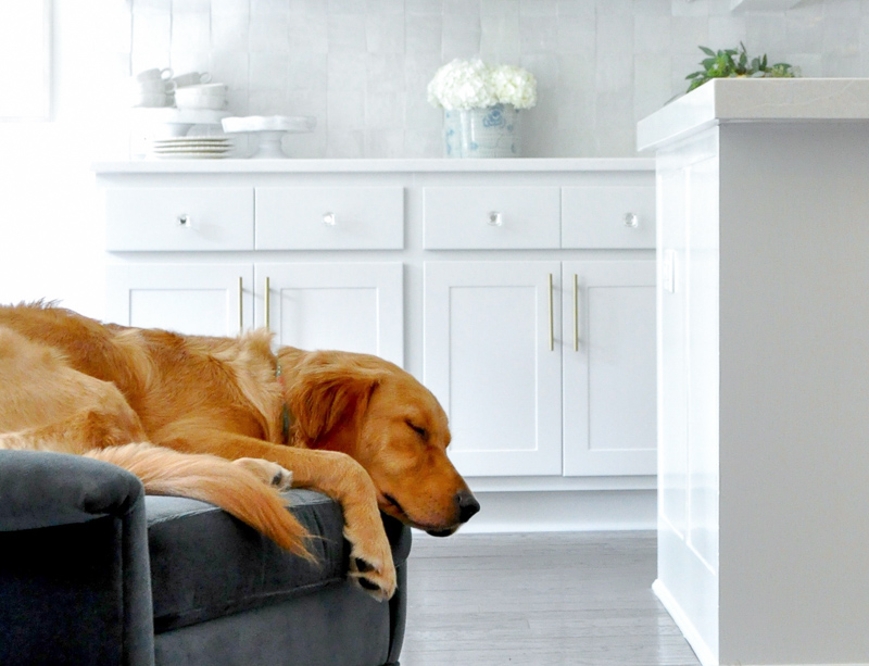 Golden retriever sleeping chair near beautiful kitchen