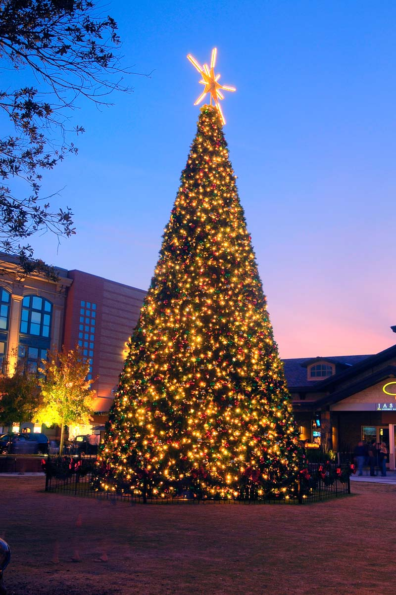 woodlands market street holiday tree
