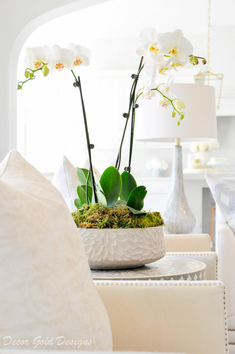 Beautiful orchid arrangement low planter