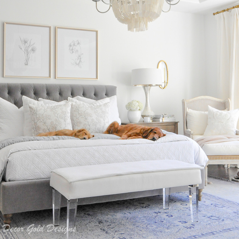 7 Steps to a Clean Home with Pets