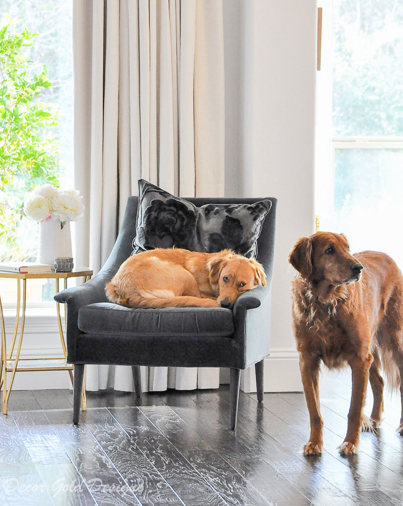 Elegant home with velvet furniture and pets
