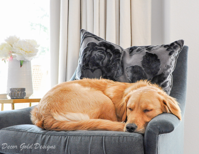 elegant home velvet furniture clean dog