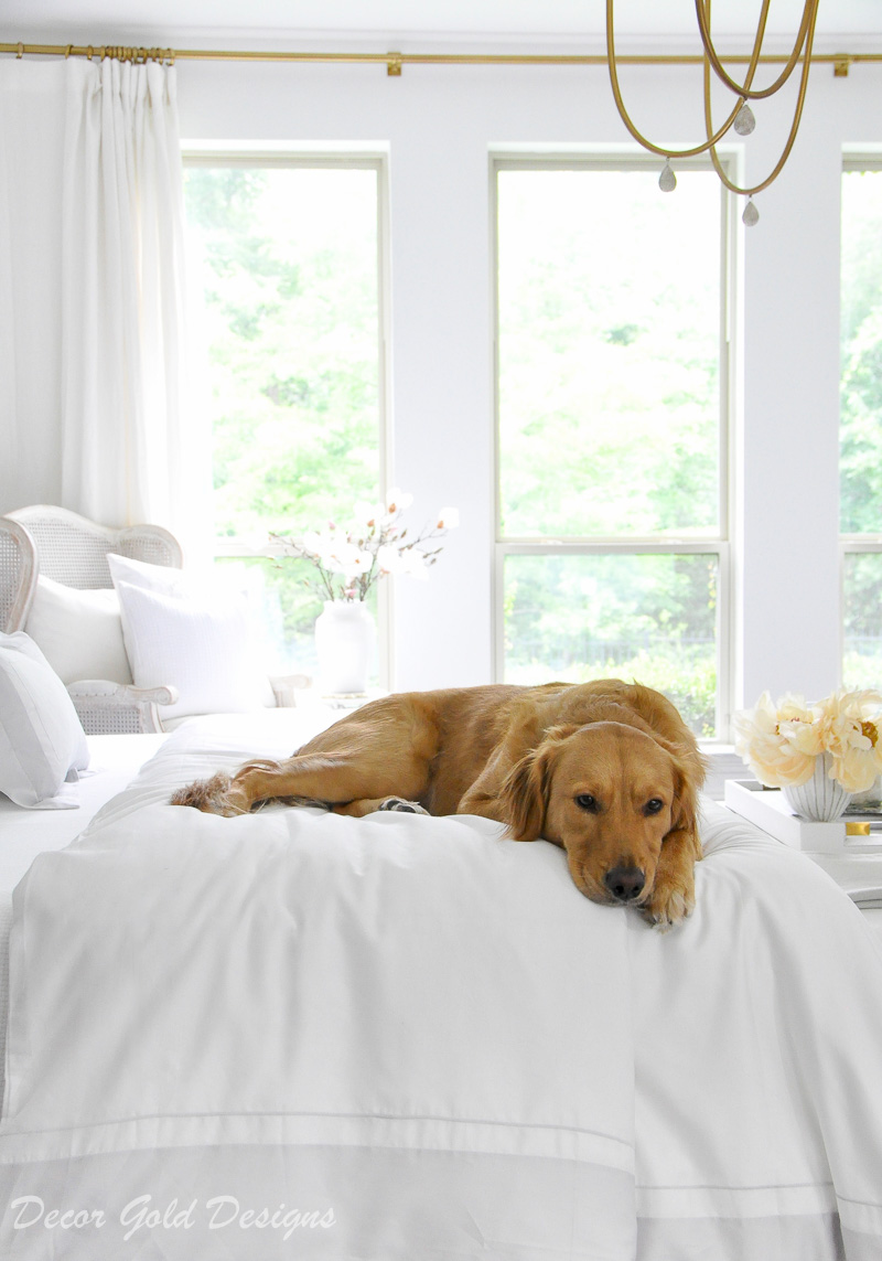 Bedding tips beautiful white bed golden retriever