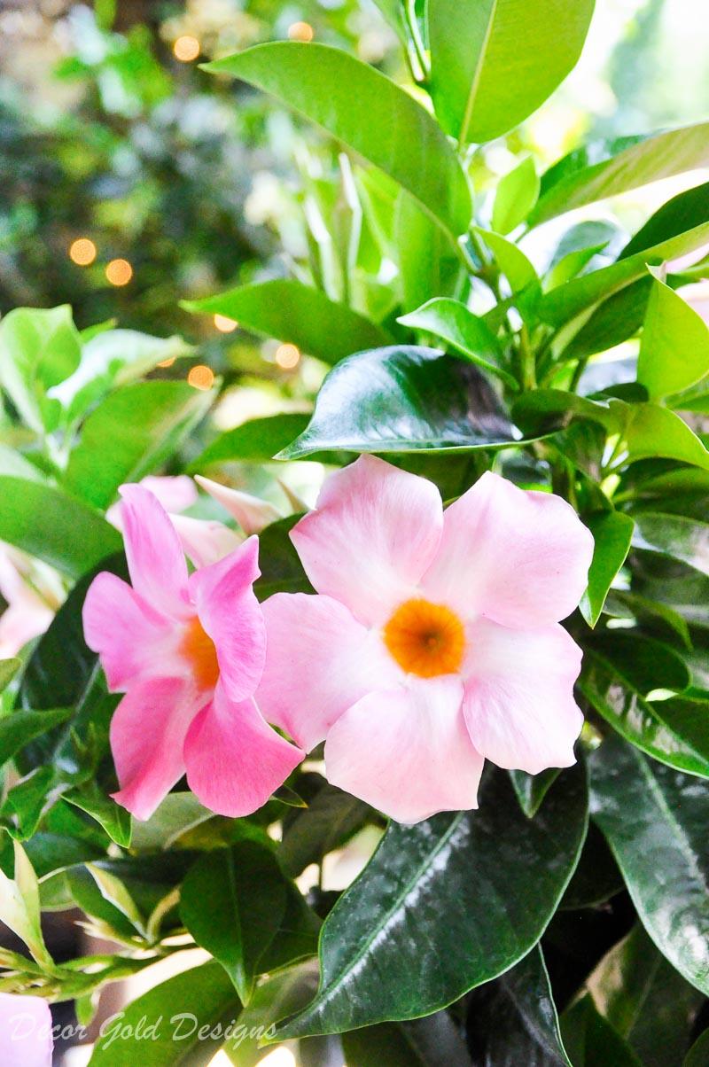 Summer patio reveal flowers