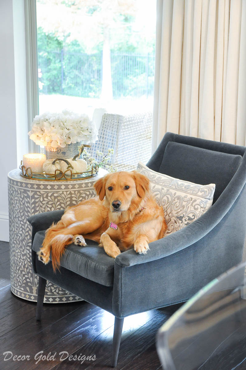 fall home tour white pumpkins golden retriever