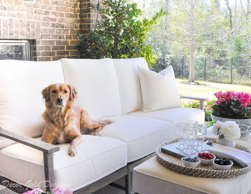 Spring ready patio gold retriever