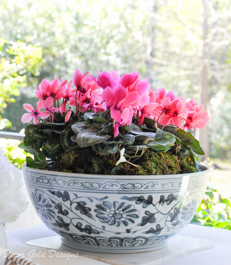 Spring ready patio shallow bowl pink garden flowers