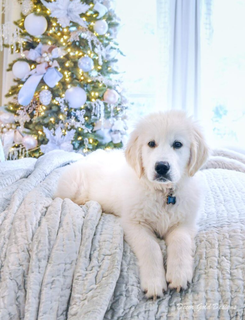 Christmas bedroom white puppy