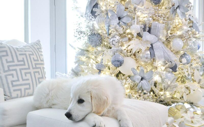 Christmas trees white retriever puppy