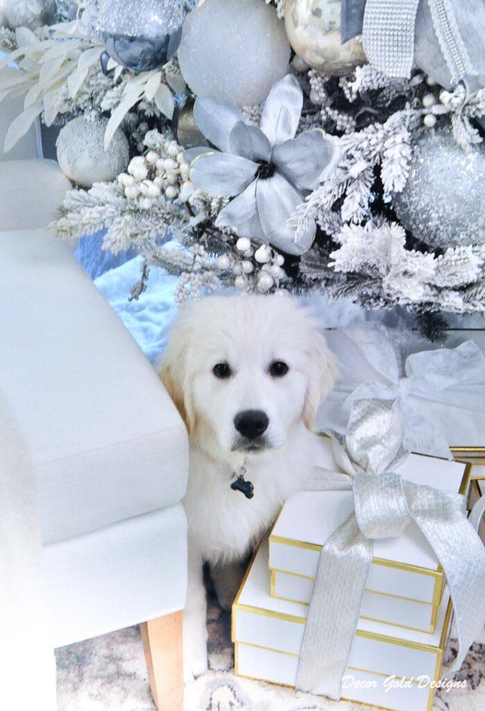 Christmas trees white retriever puppy